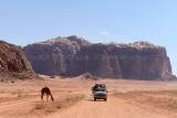2532 Voyage en Jordanie - IMG_3039_DxO web2.jpg