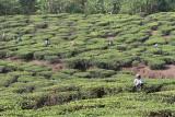 2688 - South India 2 weeks trip - 2 semaines en Inde du sud - IMG_0976_DxO WEB.jpg