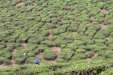 2689 - South India 2 weeks trip - 2 semaines en Inde du sud - IMG_0977_DxO WEB.jpg