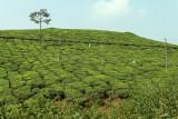2702 - South India 2 weeks trip - 2 semaines en Inde du sud - IMG_0991_DxO WEB.jpg