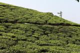 2708 - South India 2 weeks trip - 2 semaines en Inde du sud - IMG_0997_DxO WEB.jpg