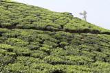 2710 - South India 2 weeks trip - 2 semaines en Inde du sud - IMG_0999_DxO WEB.jpg