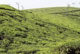2714 - South India 2 weeks trip - 2 semaines en Inde du sud - IMG_1003_DxO WEB.jpg