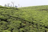 2716 - South India 2 weeks trip - 2 semaines en Inde du sud - IMG_1005_DxO WEB.jpg