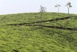2717 - South India 2 weeks trip - 2 semaines en Inde du sud - IMG_1006_DxO WEB.jpg