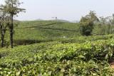 2721 - South India 2 weeks trip - 2 semaines en Inde du sud - IMG_1010_DxO WEB.jpg
