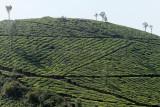 2726 - South India 2 weeks trip - 2 semaines en Inde du sud - IMG_1016_DxO WEB.jpg
