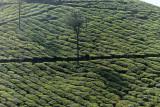 2727 - South India 2 weeks trip - 2 semaines en Inde du sud - IMG_1017_DxO WEB.jpg