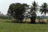 2741 - South India 2 weeks trip - 2 semaines en Inde du sud - IMG_1033_DxO WEB.jpg