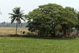 2742 - South India 2 weeks trip - 2 semaines en Inde du sud - IMG_1034_DxO WEB.jpg