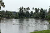2771 - South India 2 weeks trip - 2 semaines en Inde du sud - IMG_1069_DxO WEB.jpg