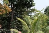 2816 - South India 2 weeks trip - 2 semaines en Inde du sud - IMG_1115_DxO WEB.jpg