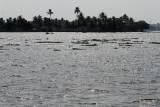 2895 - South India 2 weeks trip - 2 semaines en Inde du sud - IMG_1194_DxO WEB.jpg