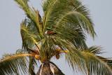 2913 - South India 2 weeks trip - 2 semaines en Inde du sud - IMG_1217_DxO WEB.jpg