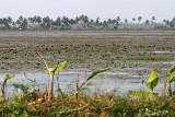 2935 - South India 2 weeks trip - 2 semaines en Inde du sud - IMG_1241_DxO WEB.jpg