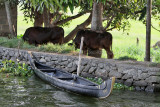 2964 - South India 2 weeks trip - 2 semaines en Inde du sud - IMG_1270_DxO WEB.jpg