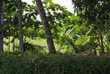 2979 - South India 2 weeks trip - 2 semaines en Inde du sud - IMG_1287_DxO WEB.jpg