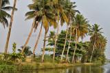 2984 - South India 2 weeks trip - 2 semaines en Inde du sud - IMG_1292_DxO WEB.jpg