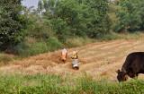 3001 - South India 2 weeks trip - 2 semaines en Inde du sud - IMG_1310_DxO WEB.jpg