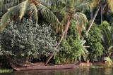 3010 - South India 2 weeks trip - 2 semaines en Inde du sud - IMG_1319_DxO WEB.jpg