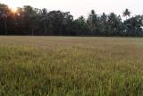 3044 - South India 2 weeks trip - 2 semaines en Inde du sud - IMG_1354_DxO WEB.jpg
