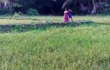 3060 - South India 2 weeks trip - 2 semaines en Inde du sud - IMG_1370_DxO WEB.jpg