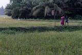 3061 - South India 2 weeks trip - 2 semaines en Inde du sud - IMG_1371_DxO WEB.jpg