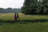 3062 - South India 2 weeks trip - 2 semaines en Inde du sud - IMG_1372_DxO WEB.jpg