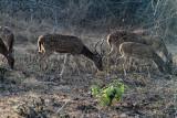 3791 - South India 2 weeks trip - 2 semaines en Inde du sud - IMG_2152_DxO WEB.jpg