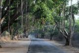3821 - South India 2 weeks trip - 2 semaines en Inde du sud - IMG_2182_DxO WEB.jpg
