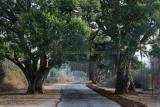 3822 - South India 2 weeks trip - 2 semaines en Inde du sud - IMG_2183_DxO WEB.jpg