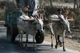 3826 - South India 2 weeks trip - 2 semaines en Inde du sud - IMG_2188_DxO WEB.jpg