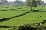 3831 - South India 2 weeks trip - 2 semaines en Inde du sud - IMG_2194_DxO WEB.jpg