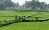3832 - South India 2 weeks trip - 2 semaines en Inde du sud - IMG_2195_DxO WEB.jpg