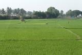 3834 - South India 2 weeks trip - 2 semaines en Inde du sud - IMG_2199_DxO WEB.jpg