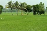 3845 - South India 2 weeks trip - 2 semaines en Inde du sud - IMG_2215_DxO WEB.jpg