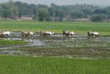 3847 - South India 2 weeks trip - 2 semaines en Inde du sud - IMG_2217_DxO WEB.jpg