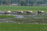 3848 - South India 2 weeks trip - 2 semaines en Inde du sud - IMG_2218_DxO WEB.jpg