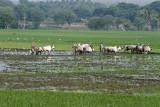 3851 - South India 2 weeks trip - 2 semaines en Inde du sud - IMG_2221_DxO WEB.jpg