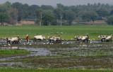 3855 - South India 2 weeks trip - 2 semaines en Inde du sud - IMG_2225_DxO WEB.jpg