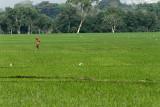3857 - South India 2 weeks trip - 2 semaines en Inde du sud - IMG_2227_DxO WEB.jpg