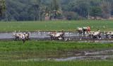 3858 - South India 2 weeks trip - 2 semaines en Inde du sud - IMG_2228_DxO WEB.jpg