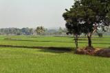 3861 - South India 2 weeks trip - 2 semaines en Inde du sud - IMG_2232_DxO WEB.jpg