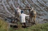3877 - South India 2 weeks trip - 2 semaines en Inde du sud - IMG_2250_DxO WEB.jpg