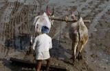3879 - South India 2 weeks trip - 2 semaines en Inde du sud - IMG_2252_DxO WEB.jpg