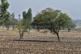 3887 - South India 2 weeks trip - 2 semaines en Inde du sud - IMG_2262_DxO WEB.jpg