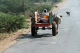 3888 - South India 2 weeks trip - 2 semaines en Inde du sud - IMG_2264_DxO WEB.jpg