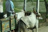 3900 - South India 2 weeks trip - 2 semaines en Inde du sud - IMG_2282_DxO WEB.jpg
