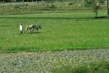 3903 - South India 2 weeks trip - 2 semaines en Inde du sud - IMG_2285_DxO WEB.jpg