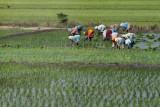 3906 - South India 2 weeks trip - 2 semaines en Inde du sud - IMG_2288_DxO WEB.jpg